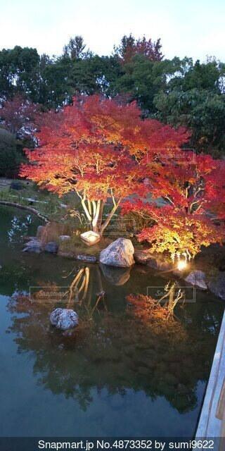 もみじと池の写真・画像素材[4873352]