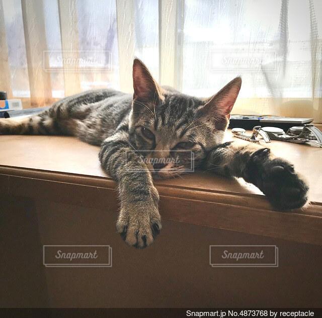 窓の前に横たわっている猫の写真・画像素材[4873768]