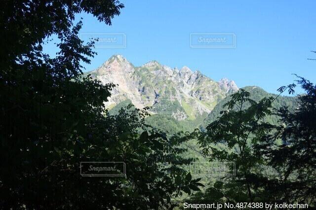 木の影の奥に北アルプスの写真・画像素材[4874388]