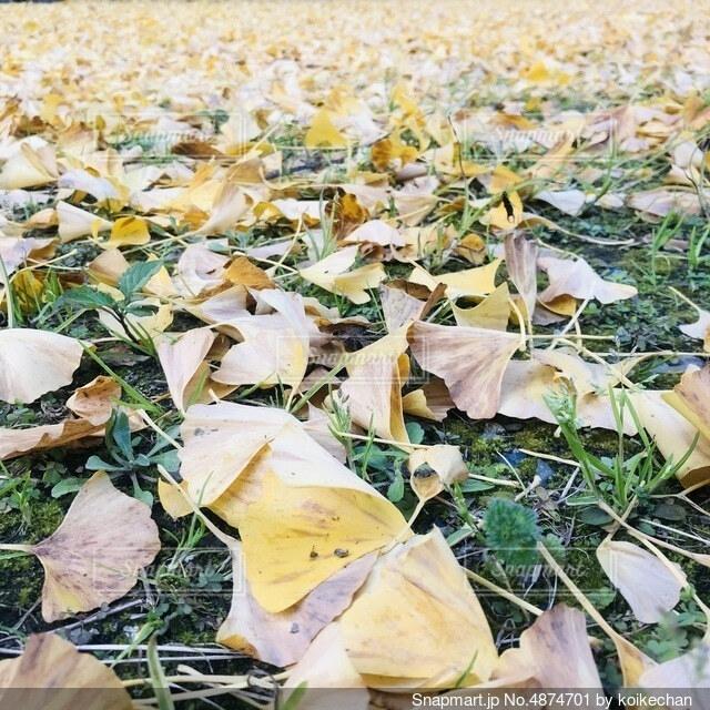 草で覆われた畑の上に座っているピザの写真・画像素材[4874701]