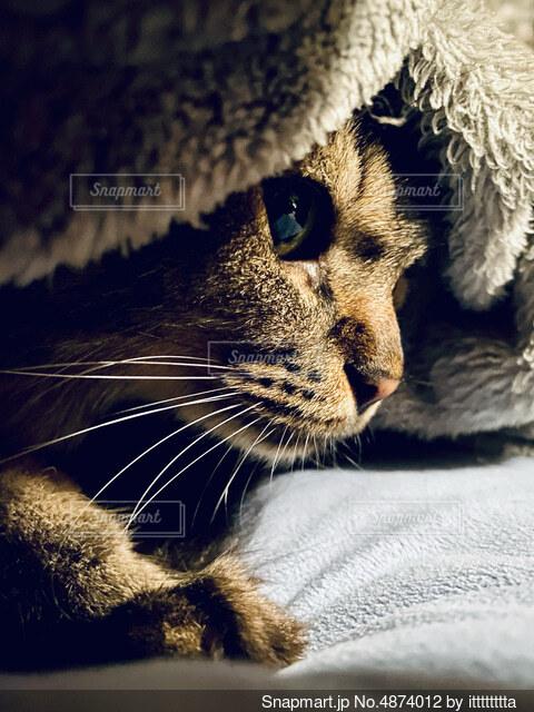 猫の写真の写真・画像素材[4874012]