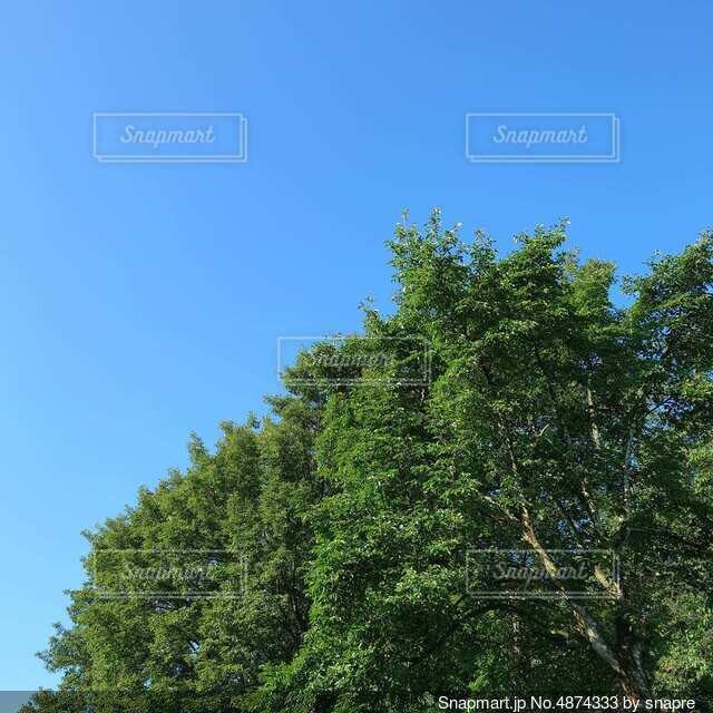 青空と大きな木の写真・画像素材[4874333]