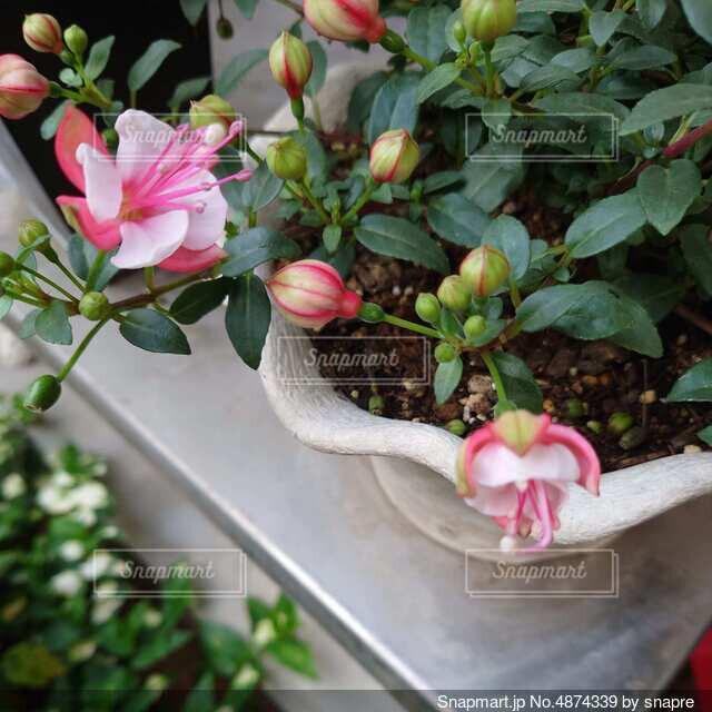 ピンクの花の写真・画像素材[4874339]