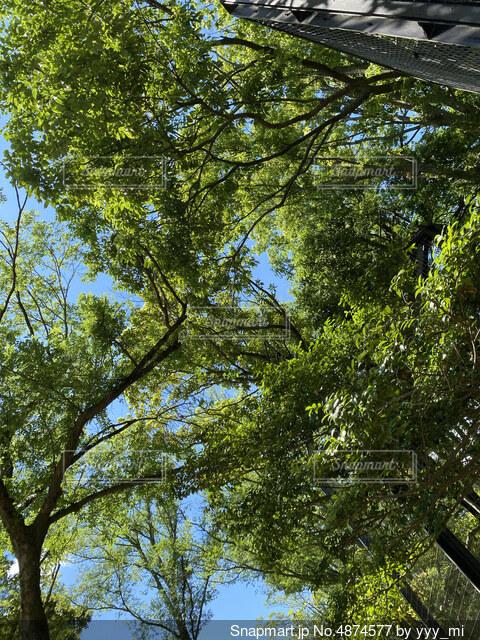 木と空の写真・画像素材[4874577]