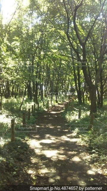 森の中の木の写真・画像素材[4874657]