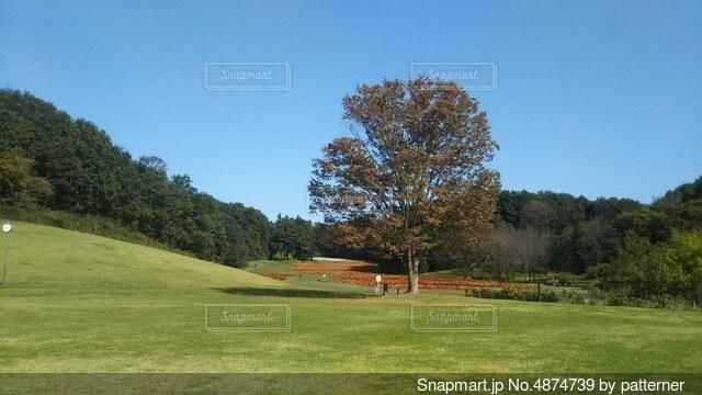 背景に木々のある大きな緑の畑の写真・画像素材[4874739]