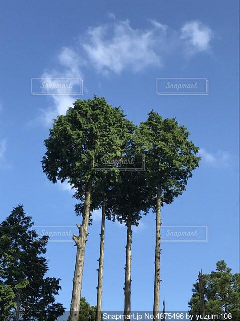 ハートに見える木の写真・画像素材[4875496]