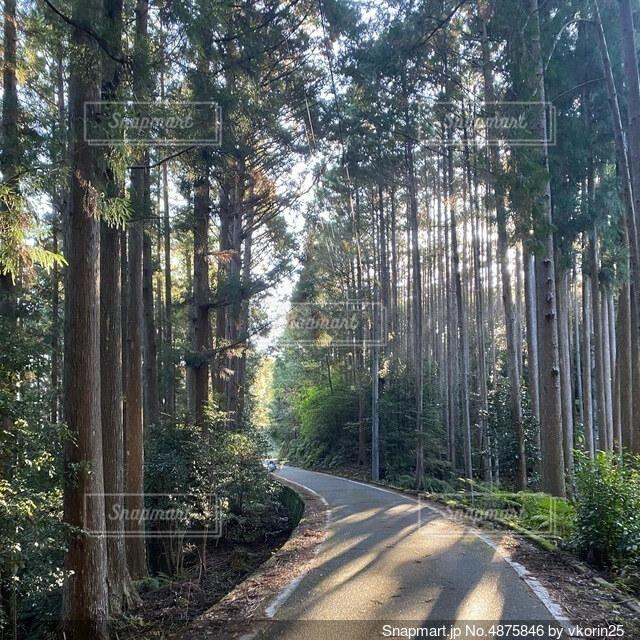 木漏れ日の道の写真・画像素材[4875846]