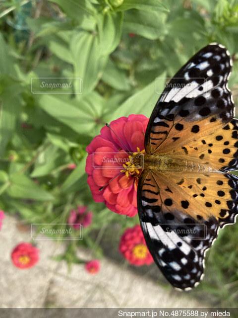 羽を広げての写真・画像素材[4875588]