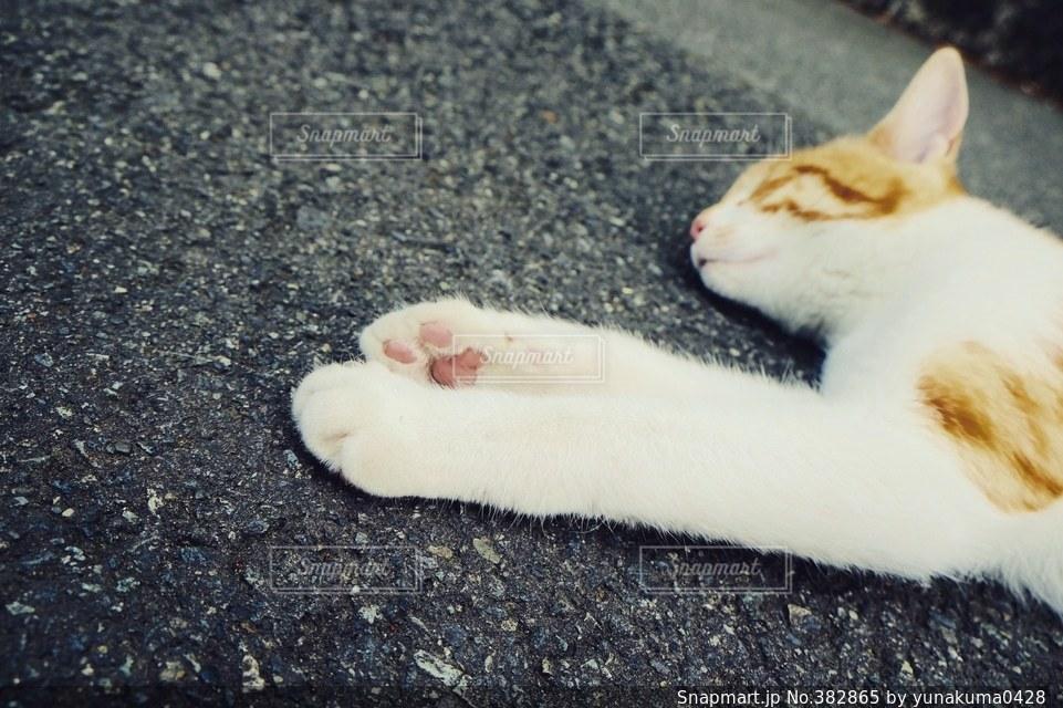 猫の写真・画像素材[382865]