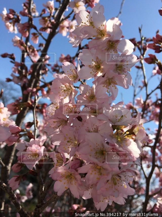 アウトドア,空,春,自撮り,花見,お花見