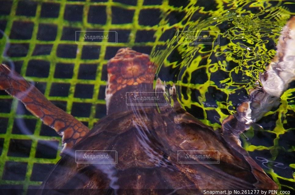魚の写真・画像素材[261277]