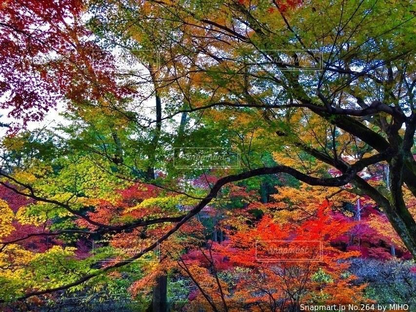 フォレスト内のツリーの写真・画像素材[264]