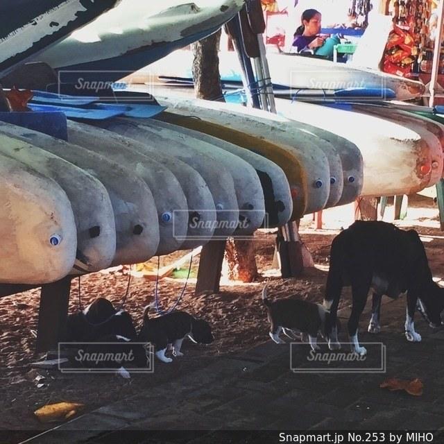 飛行機の周りに立って人々 のグループの写真・画像素材[253]