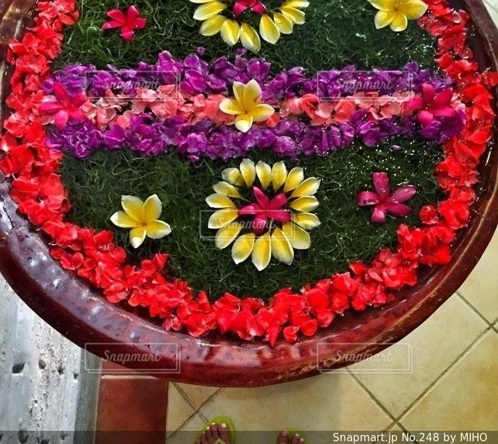 近くの花のアップの写真・画像素材[248]