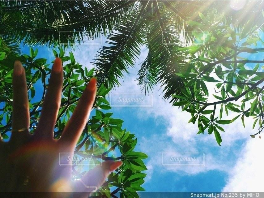ヤシの木の写真・画像素材[235]