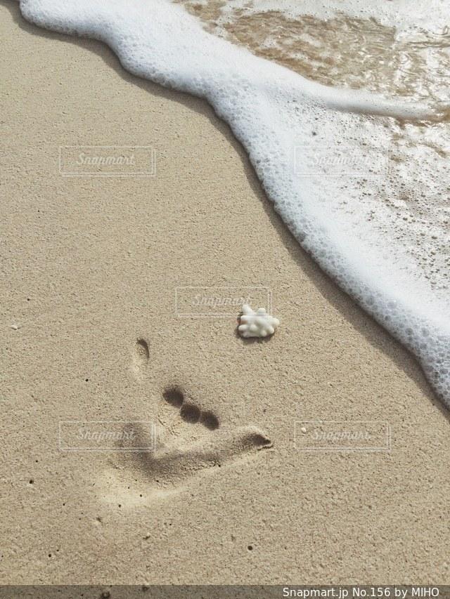 砂の中に立っている鳥の写真・画像素材[156]
