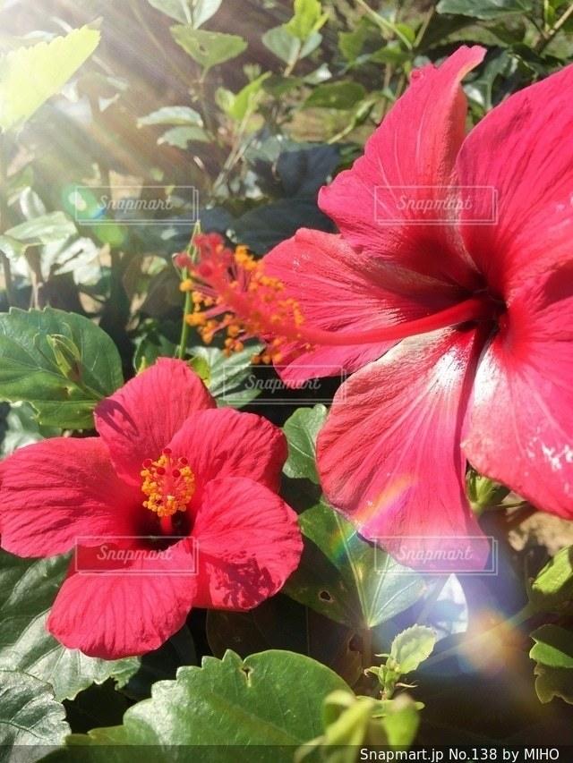 植物の赤い花 - No.138