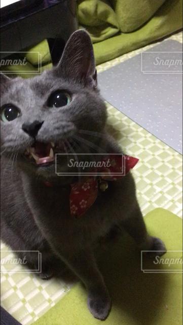 猫 - No.122057