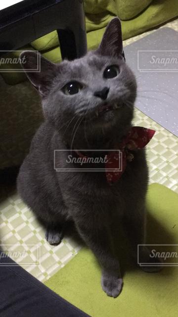 猫の写真・画像素材[122059]
