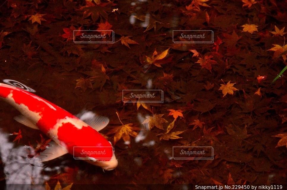 秋の写真・画像素材[229450]