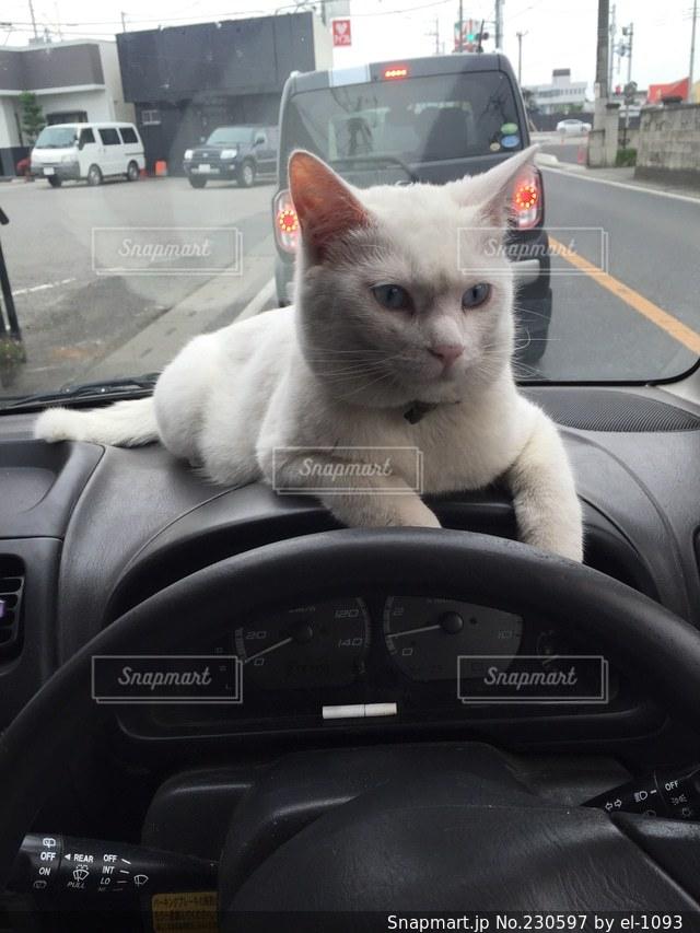 猫の写真・画像素材[230597]