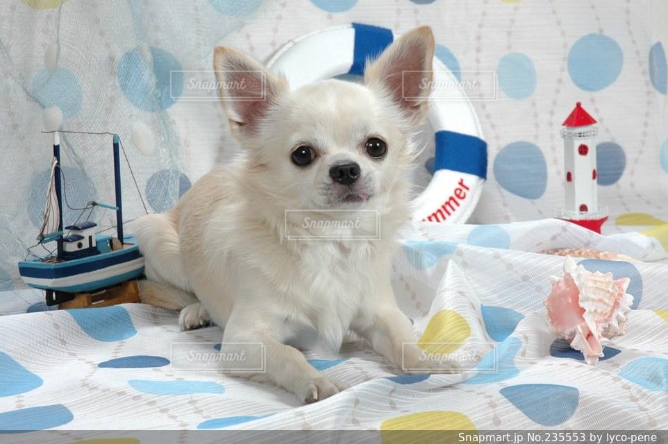 犬の写真・画像素材[235553]