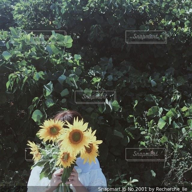 夏の写真・画像素材[2001]