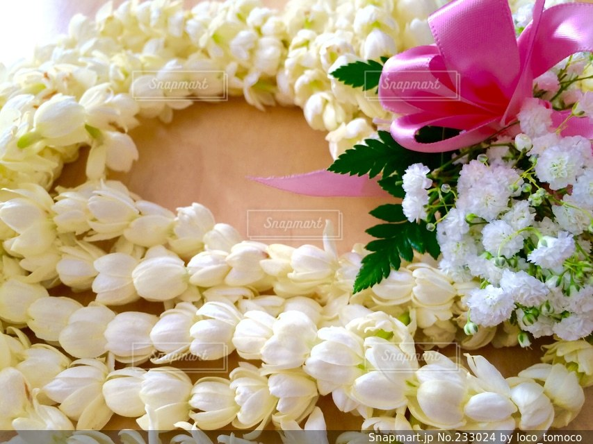 花の写真・画像素材[233024]