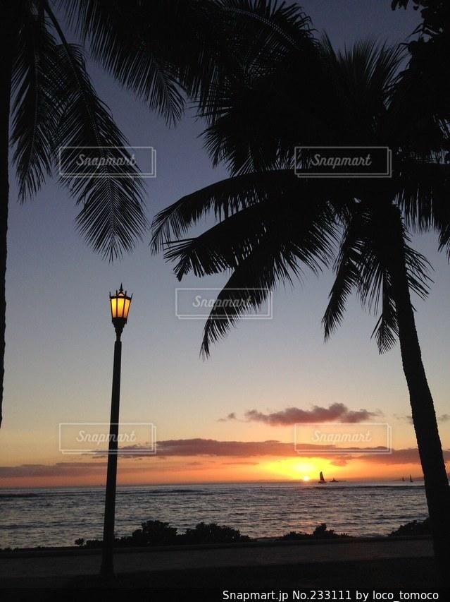 自然の写真・画像素材[233111]