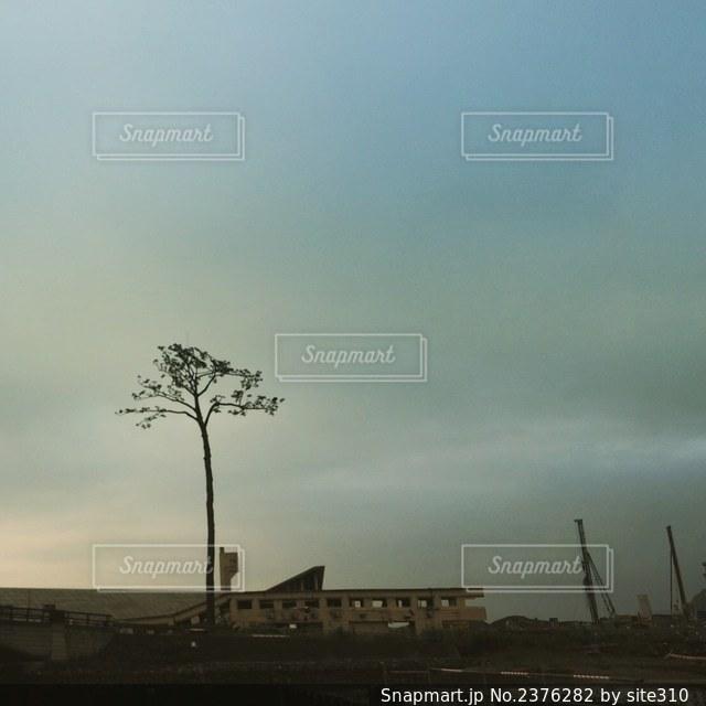 奇跡の一本松の写真・画像素材[2376282]