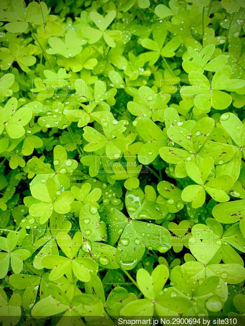緑の植物のクローズアップの写真・画像素材[2900694]