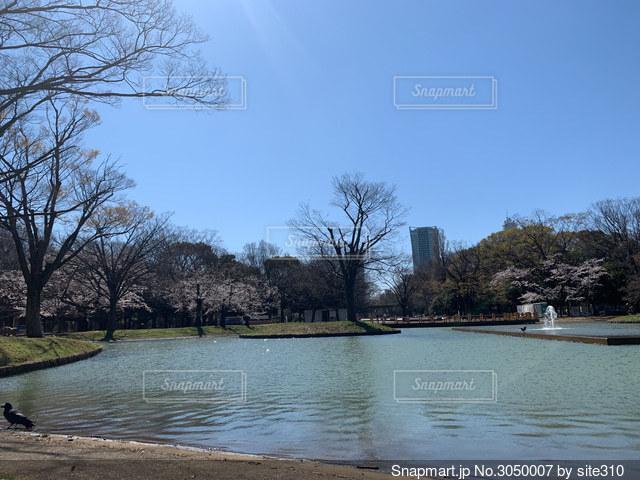 代々木公園の池の写真・画像素材[3050007]