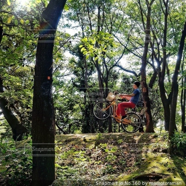 森の中の木 - No.360