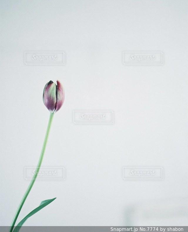 花の写真・画像素材[7774]