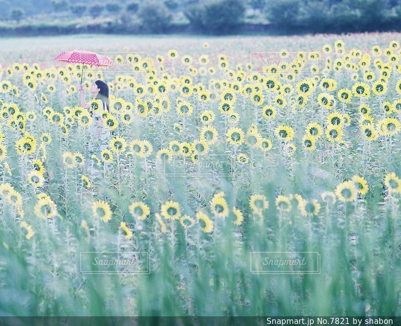 自然の写真・画像素材[7821]