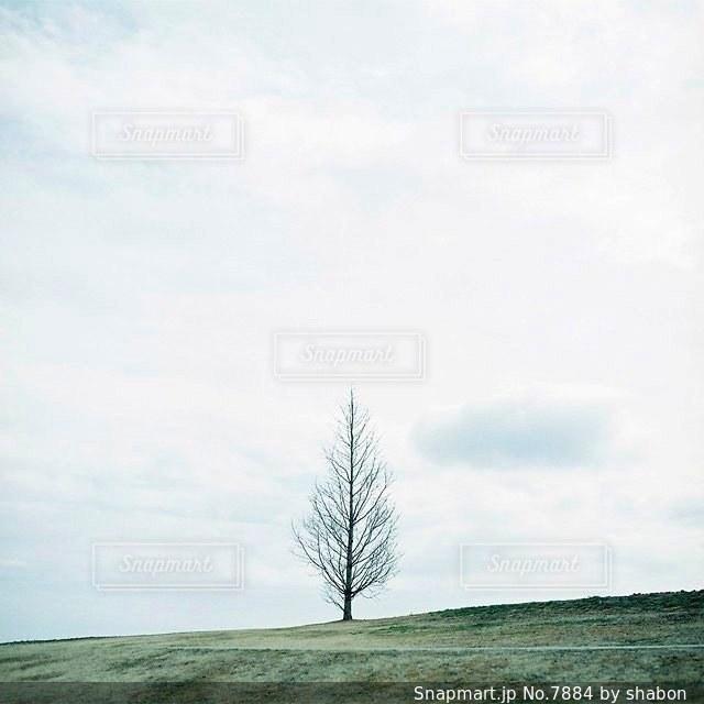 自然の写真・画像素材[7884]