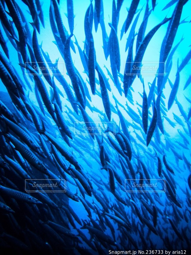 海の写真・画像素材[236733]