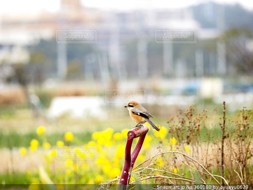 風景,花,春,鳥,日本