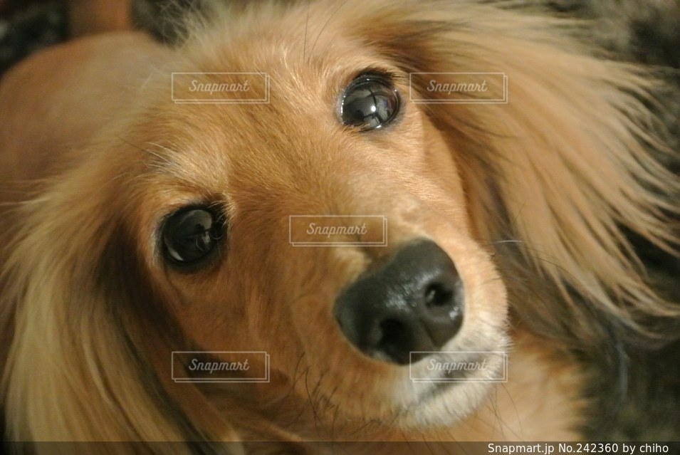 犬の写真・画像素材[242360]