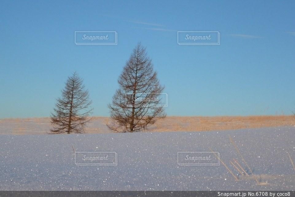 自然の写真・画像素材[6708]