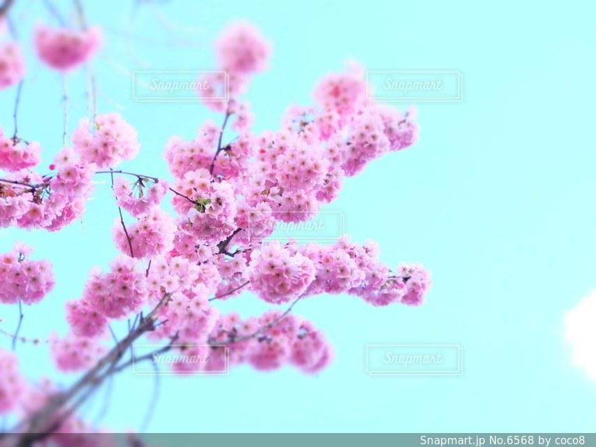 花の写真・画像素材[6568]