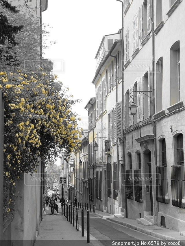 花の写真・画像素材[6579]