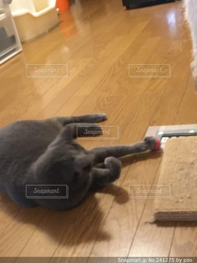 猫の写真・画像素材[241275]