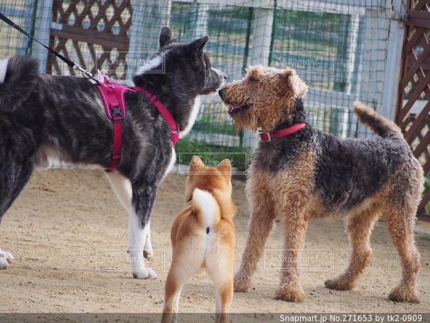犬の写真・画像素材[271653]