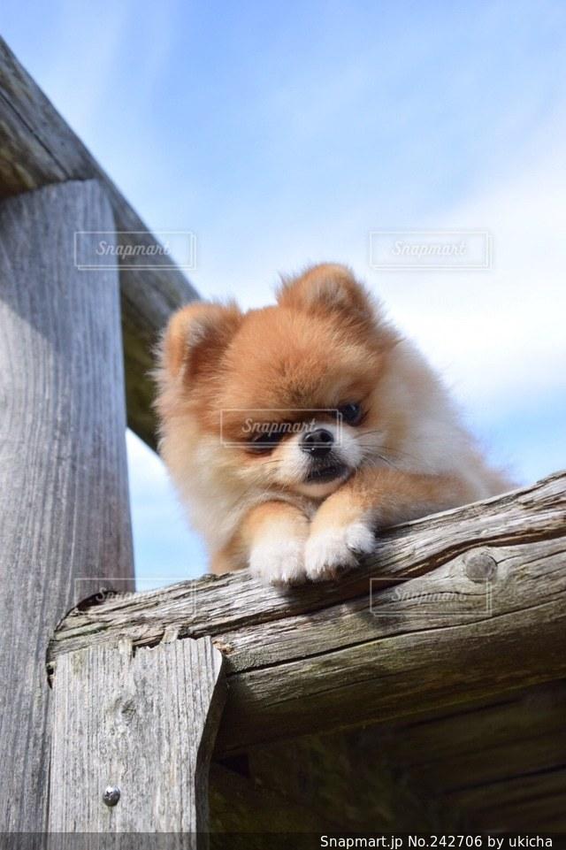 No.242706 犬