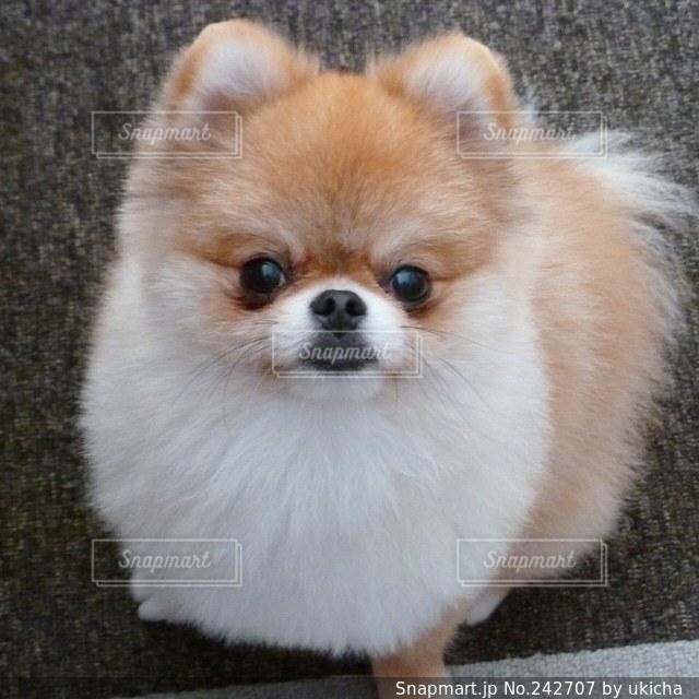 犬の写真・画像素材[242707]