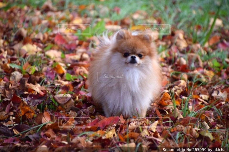 犬の写真・画像素材[265999]