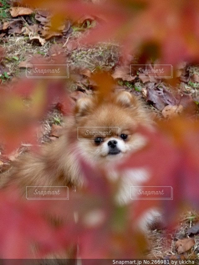 犬の写真・画像素材[266981]