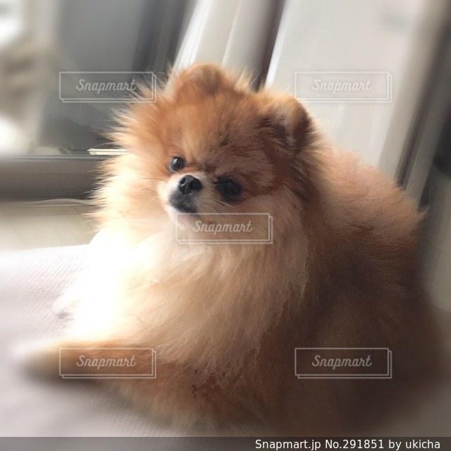 犬の写真・画像素材[291851]
